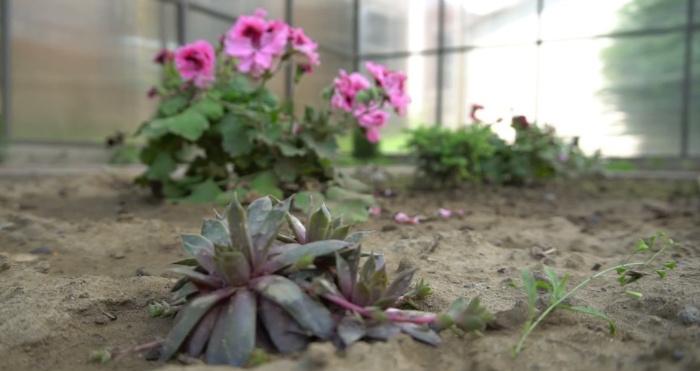Ботанічний сад в ліцеї