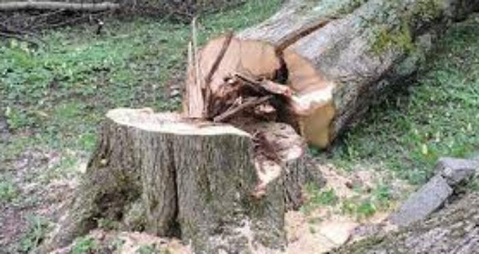 Аварійні дерева