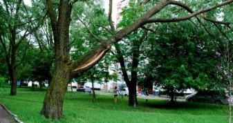 Аварійне дерево