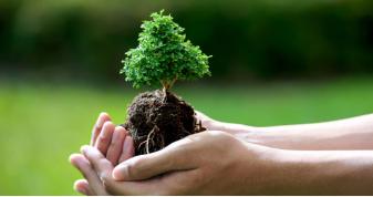 На озеленення Луцька планують витратити понад 120 мільйонів гривень