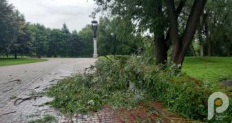 У міському парку «Слов'янський» буревій понищив найбільше дерев.