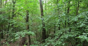 Ліс посаджений у 1991 році