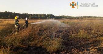 Горіла суха трава та чагарники у Комарово