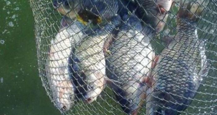 На озері Мшани спіймали рибного браконьєра