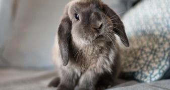 Кролик. Фото ілюстративне