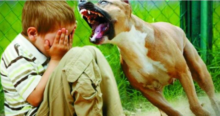 На Волині зареєстрували 14 випадків нападу тварин на дітей