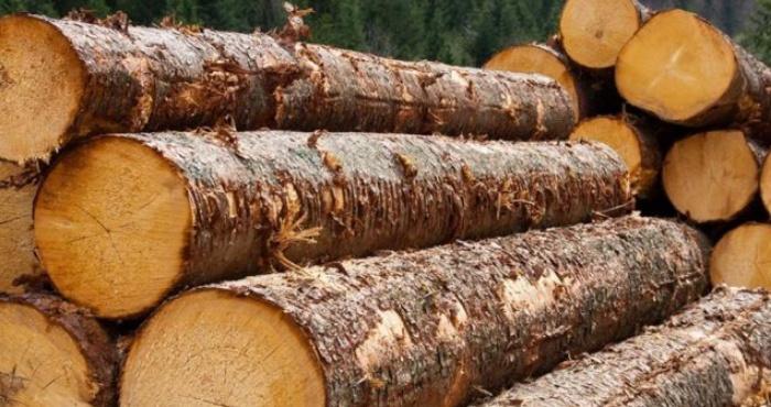 Волинян покарають за незаконно зрубані дерева