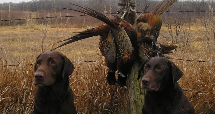 З 7 серпня розпочинається сезон полювання на пернату дичину.