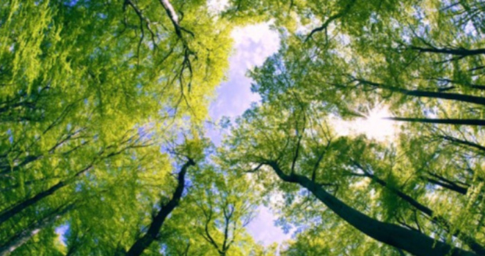 Лісові ресурси
