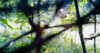 Фото з камери фіксації порушення у Рудниківському лісництві
