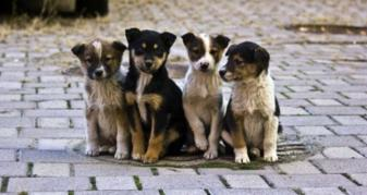 Безпритульні тварини / Фото ілюстративне