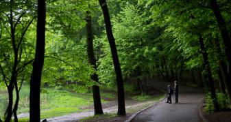 Прогулянка з родиною бьордвотчерів